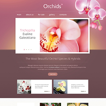 Website Template № 46439