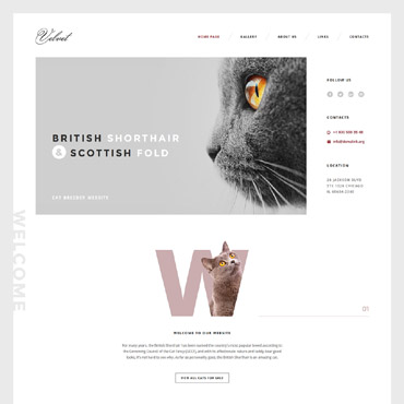 Website Template № 58574